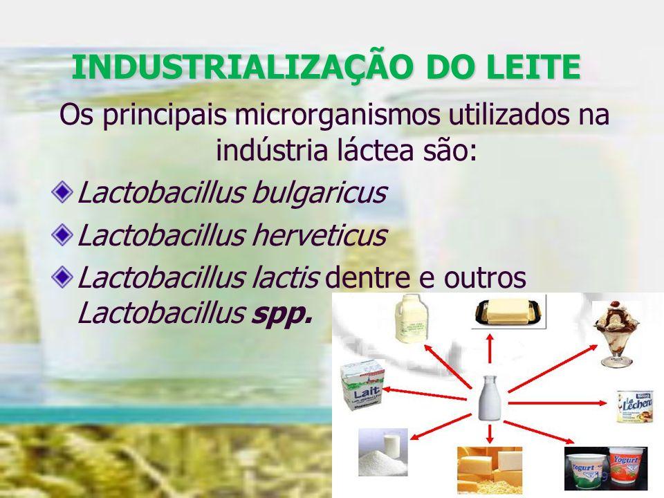 INDUSTRIALIZAÇÃO DO LEITE Os principais microrganismos utilizados na indústria láctea são: Lactobacillus bulgaricus Lactobacillus herveticus Lactobaci