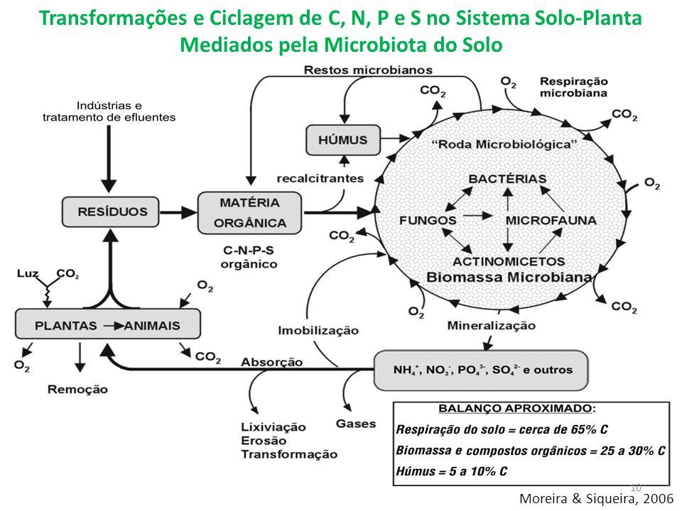 Moreira & Siqueira, 2006 Transformações e Ciclagem de C, N, P e S no Sistema Solo-Planta Mediados pela Microbiota do Solo 10