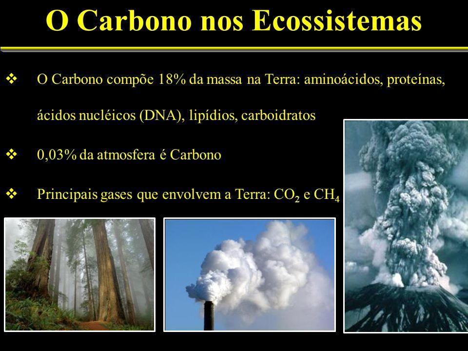 O Carbono nos Ecossistemas O Carbono compõe 18% da massa na Terra: aminoácidos, proteínas, ácidos nucléicos (DNA), lipídios, carboidratos 0,03% da atm