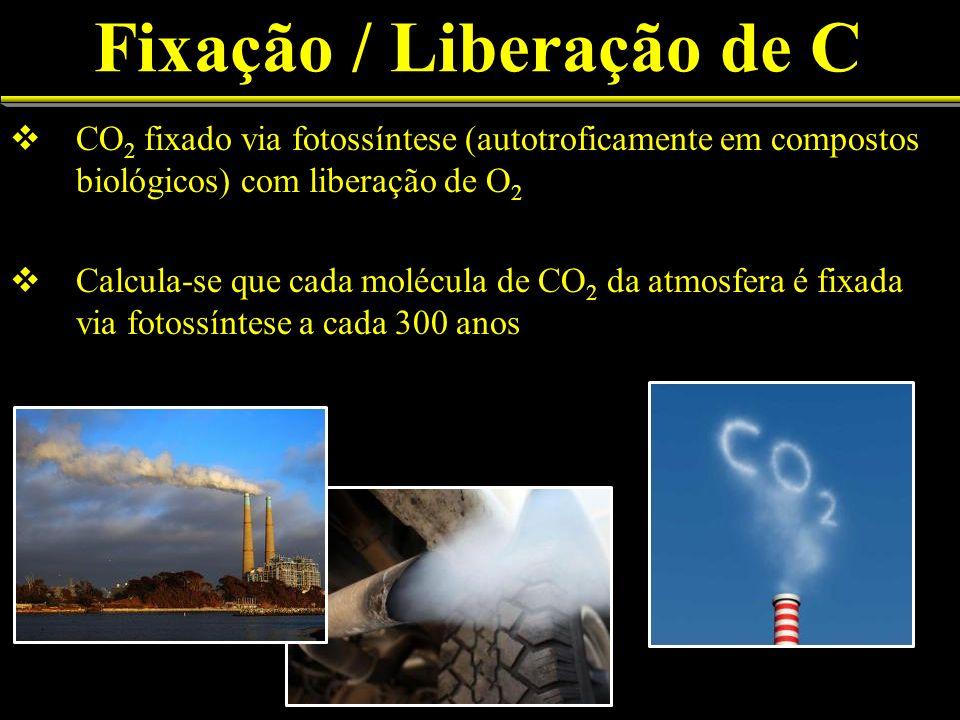 Fixação / Liberação de C CO 2 fixado via fotossíntese (autotroficamente em compostos biológicos) com liberação de O 2 Calcula-se que cada molécula de