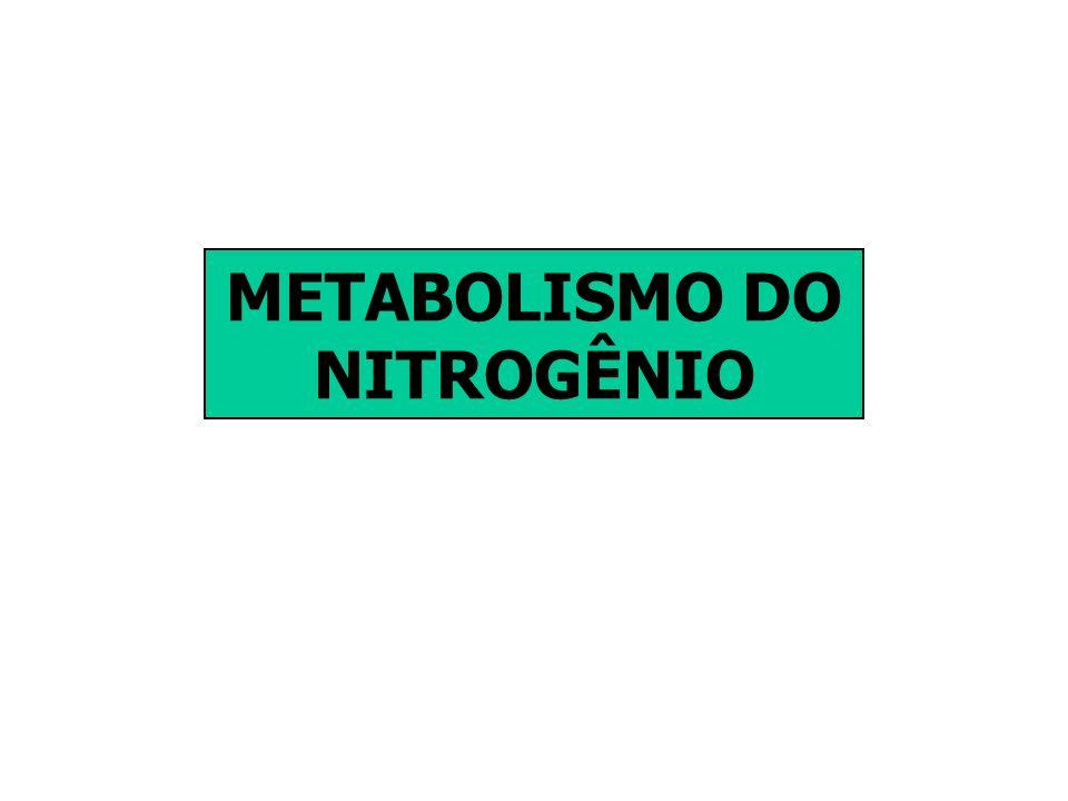 REDUTASE DO NITRATO (RN) É dependente de NADH É formada de duas sub-unidades de 110-115 KDa de massa molecular, com grupo prostético FAD, Heme(Fe), citocromo b 557 e cofator Mo.