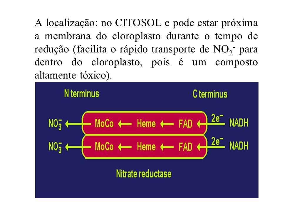 REDUTASE DO NITRATO (RN) É dependente de NADH É formada de duas sub-unidades de 110-115 KDa de massa molecular, com grupo prostético FAD, Heme(Fe), ci