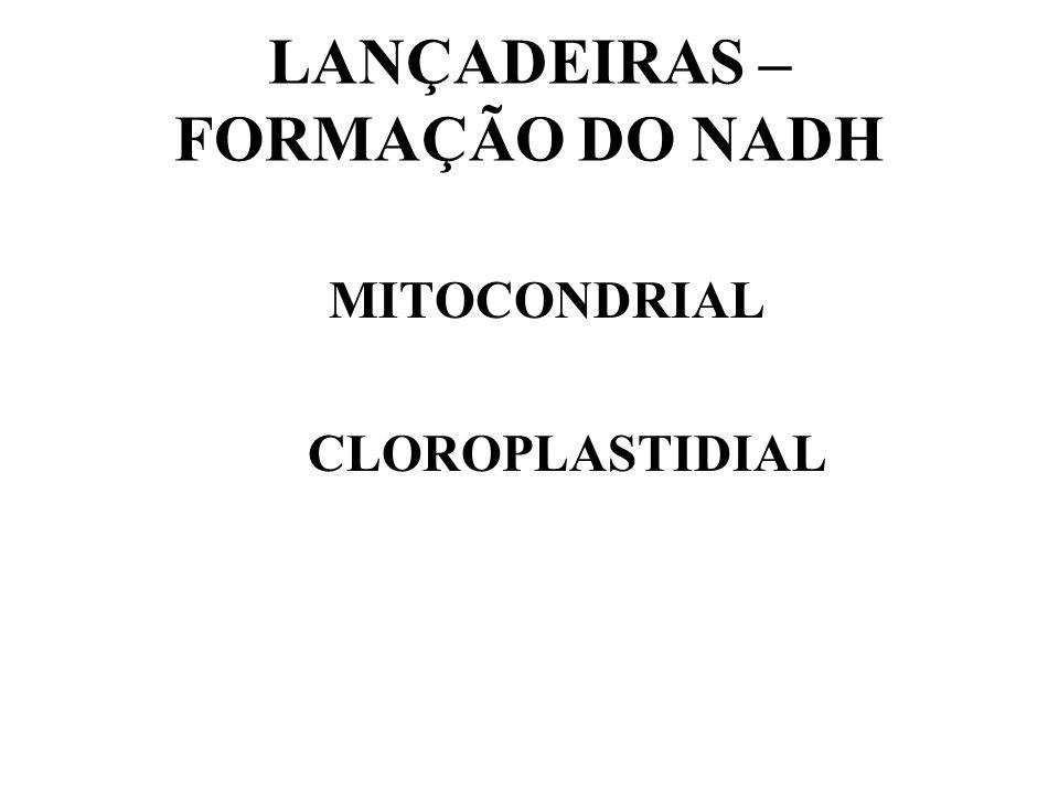 A localização: no CITOSOL e pode estar próxima a membrana do cloroplasto durante o tempo de redução (facilita o rápido transporte de NO 2 - para dentr