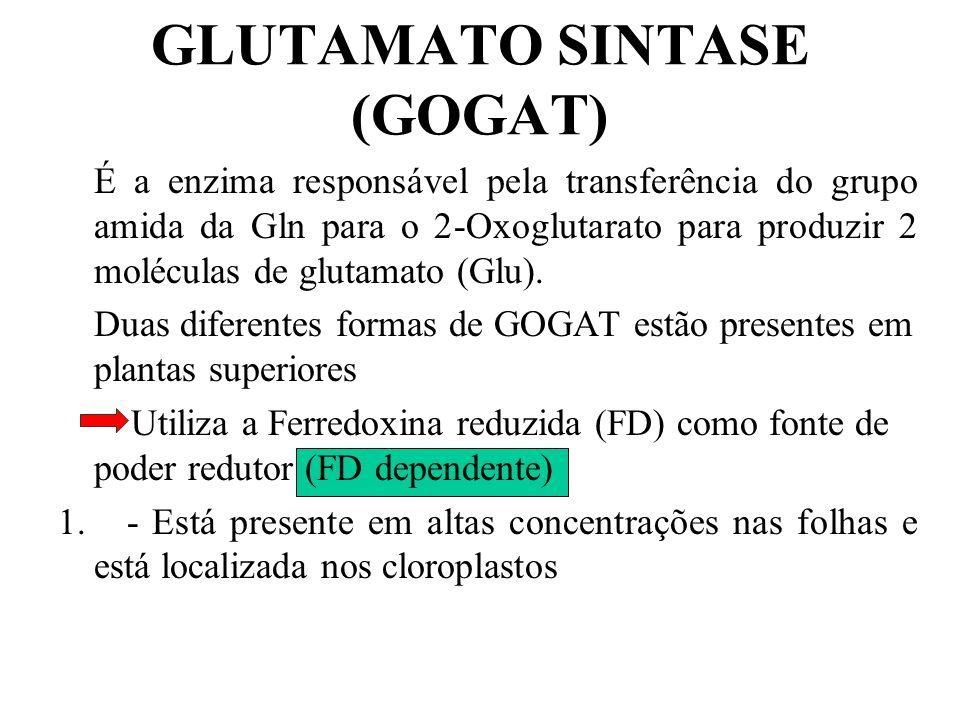 ATP ADP + Pi Mg +2 GLUTAMATO + NH 3 GLUTAMINA