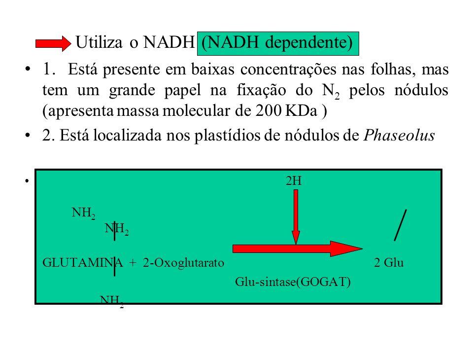 GLUTAMATO SINTASE (GOGAT) É a enzima responsável pela transferência do grupo amida da Gln para o 2-Oxoglutarato para produzir 2 moléculas de glutamato