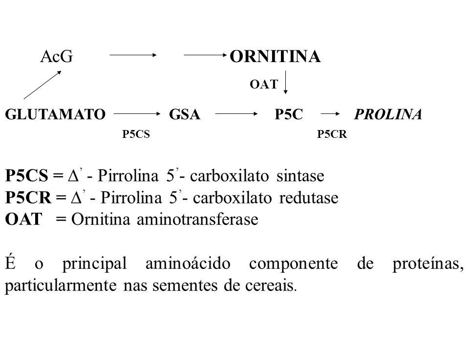 A enzimiologia das reações não está bem esclarecida em plantas superiores, somente a última enzima do passo metabólico está bem caracterizada e locali
