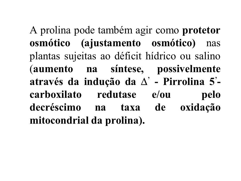 AcG ORNITINA OAT GLUTAMATO GSA P5C PROLINA P5CS P5CR P5CS = - Pirrolina 5 - carboxilato sintase P5CR = - Pirrolina 5 - carboxilato redutase OAT = Orni