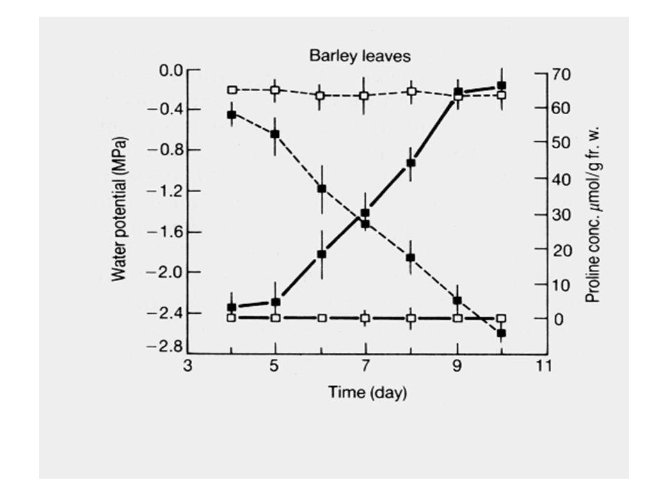 A prolina pode também agir como protetor osmótico (ajustamento osmótico) nas plantas sujeitas ao déficit hídrico ou salino (aumento na síntese, possiv