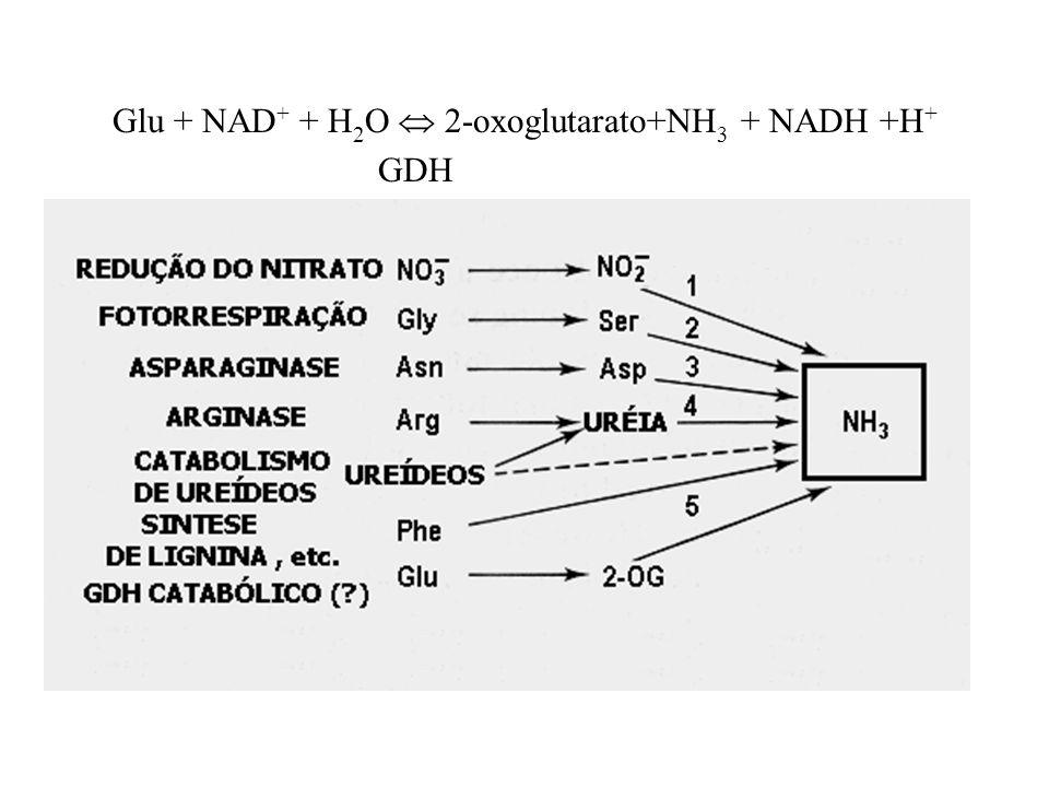 4. Reações específicas dos aminoácidos: É liberada durante a conversão da Phe cinamato (produção de lignina); Cistationina Homoserina (na síntese da m