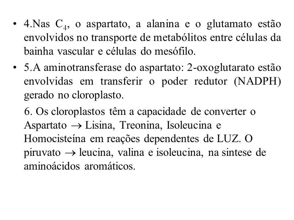 JUSTIFICATIVAS 1.1. O NO 2 - pode ser reduzido numa reação dependente da luz nos cloroplastos para formar glutamina e glutamato. 2.RNi, GS, GOGAT estã