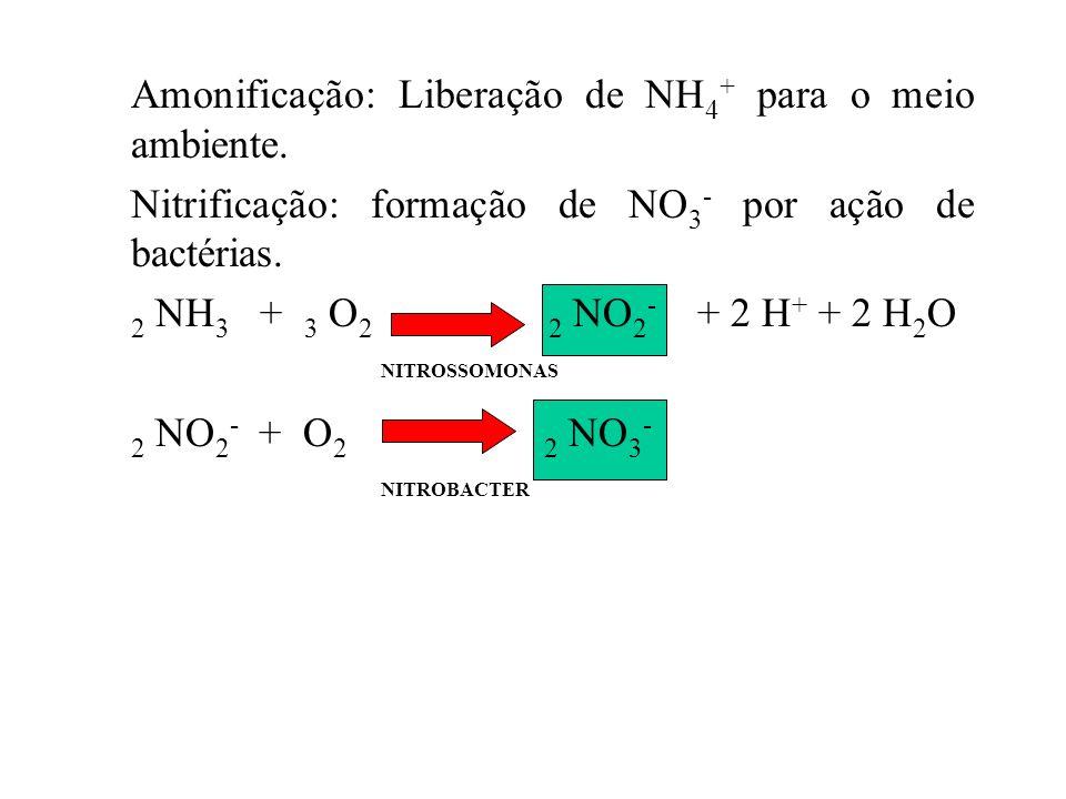 SOLO Bactérias Rhizobium O CICLO DO NITROGÊNIO N2N2 Fixação Biológica ou Simbiótica Fixação Não Simbiótica N2N2 NH 3 /NH 4 + NO 2 - NO 3 - Amonificaçã