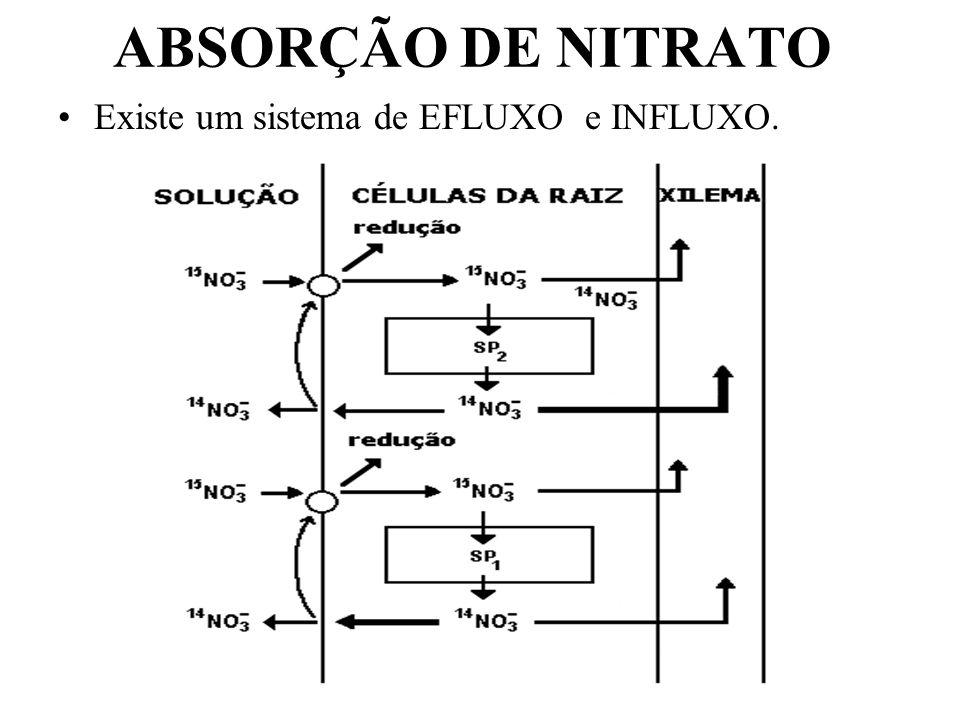 Exemplos: Em soja, após 10 minutos de aplicação de 13 N 2, 40% da radioatividade foi encontrado no ác.alantóico.
