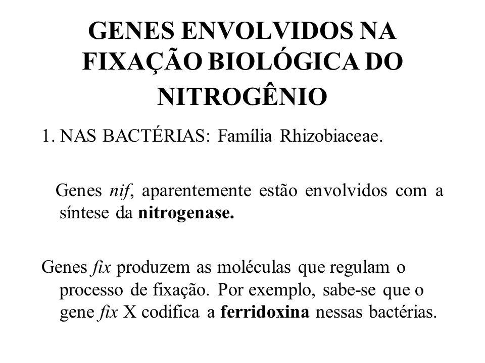 2.As estratégias desenvolvidas para evitar o excesso de O 2 nos nódulos radiculares, prevenindo contra a conseqüente inibição da nitrogenase, foram du