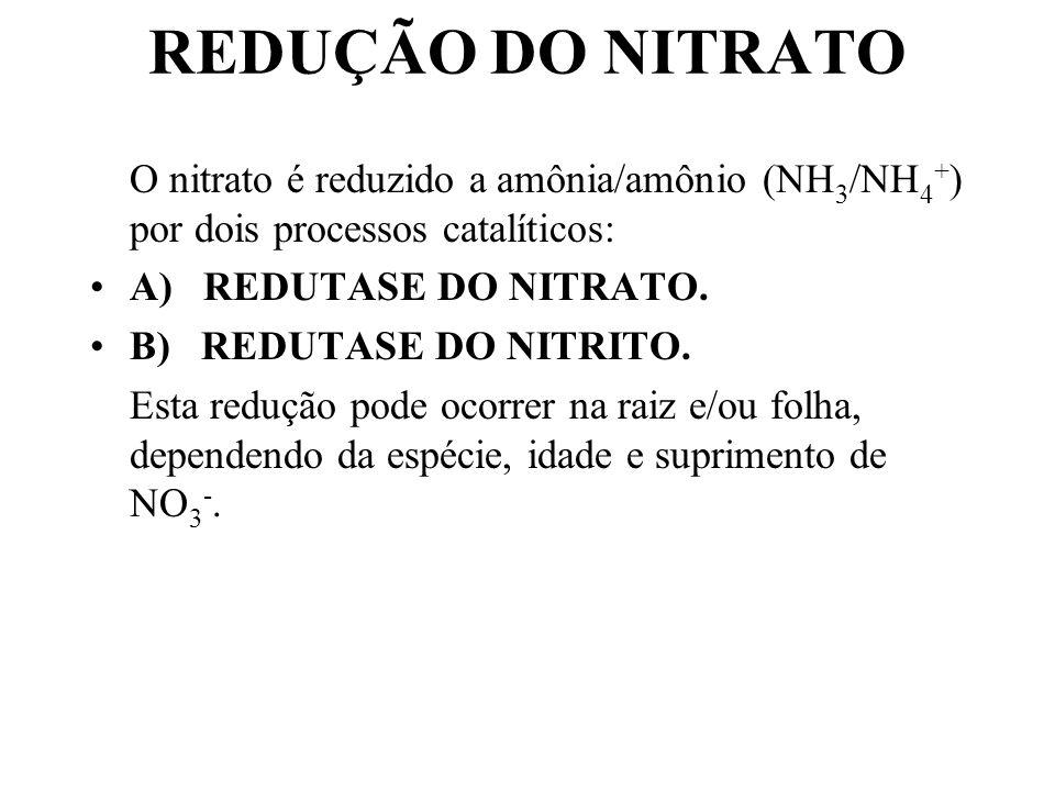 REDUÇÃO DO NITRATO O nitrato é reduzido a amônia/amônio (NH 3 /NH 4 + ) por dois processos catalíticos: A) REDUTASE DO NITRATO.