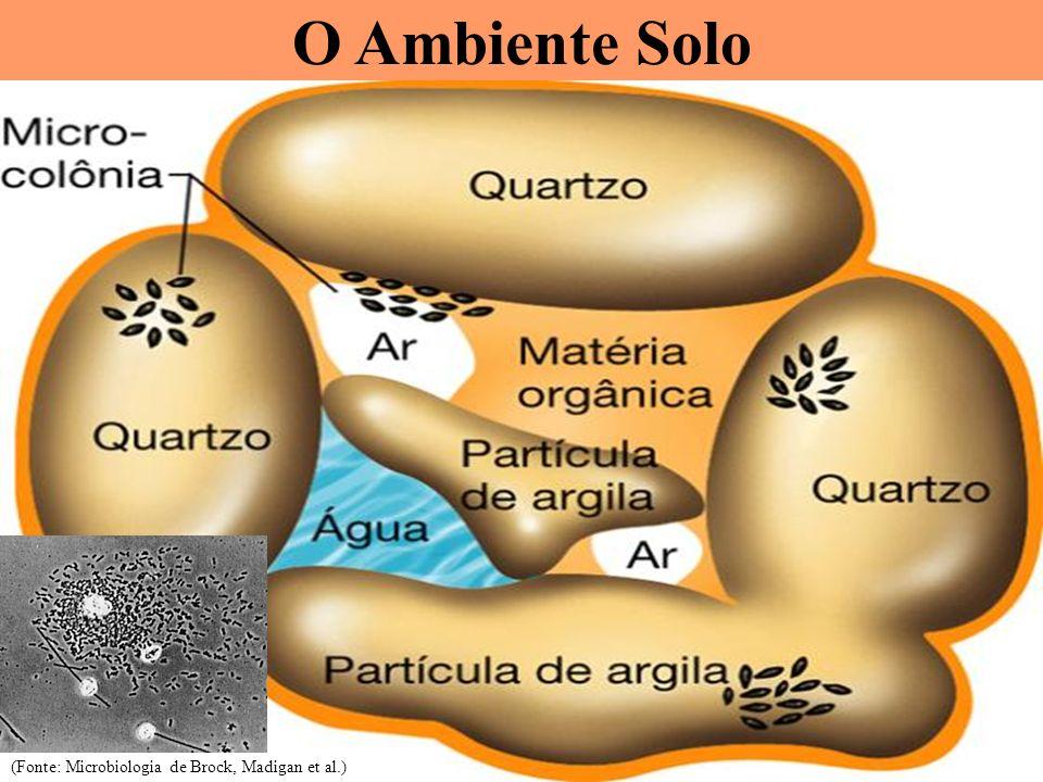 O Ambiente Solo (Fonte: Microbiologia de Brock, Madigan et al.)