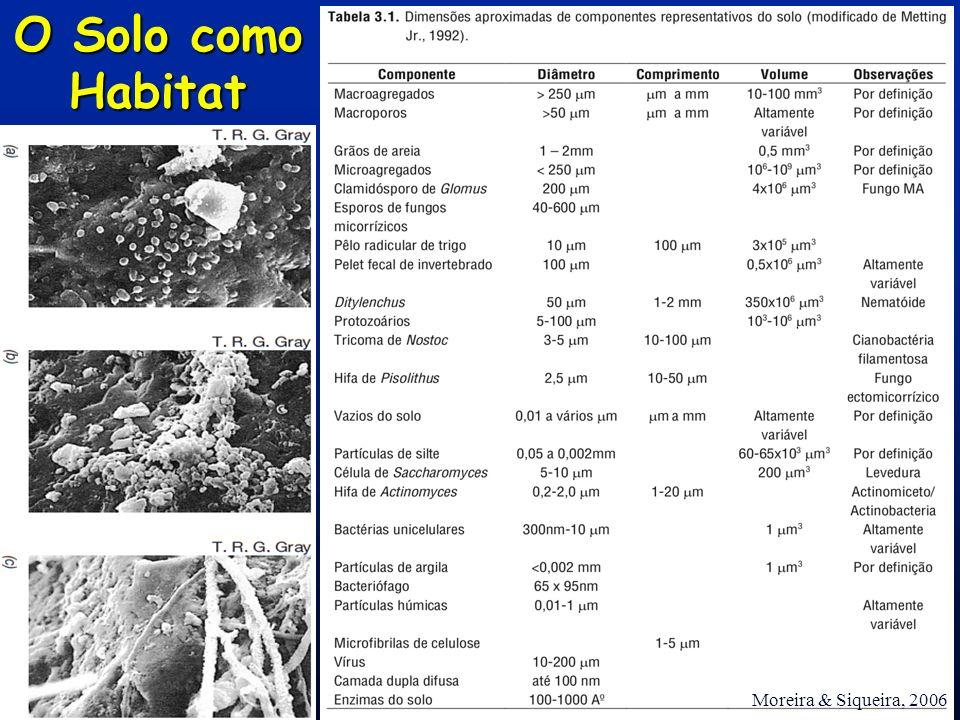 O Solo como Habitat Moreira & Siqueira, 2006