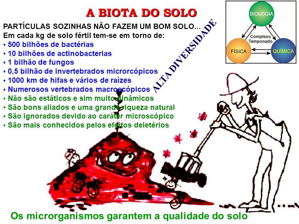 A BIOTA DO SOLO PARTÍCULAS SOZINHAS NÃO FAZEM UM BOM SOLO... Em cada kg de solo fértil tem-se em torno de: 500 bilhões de bactérias 10 bilhões de acti