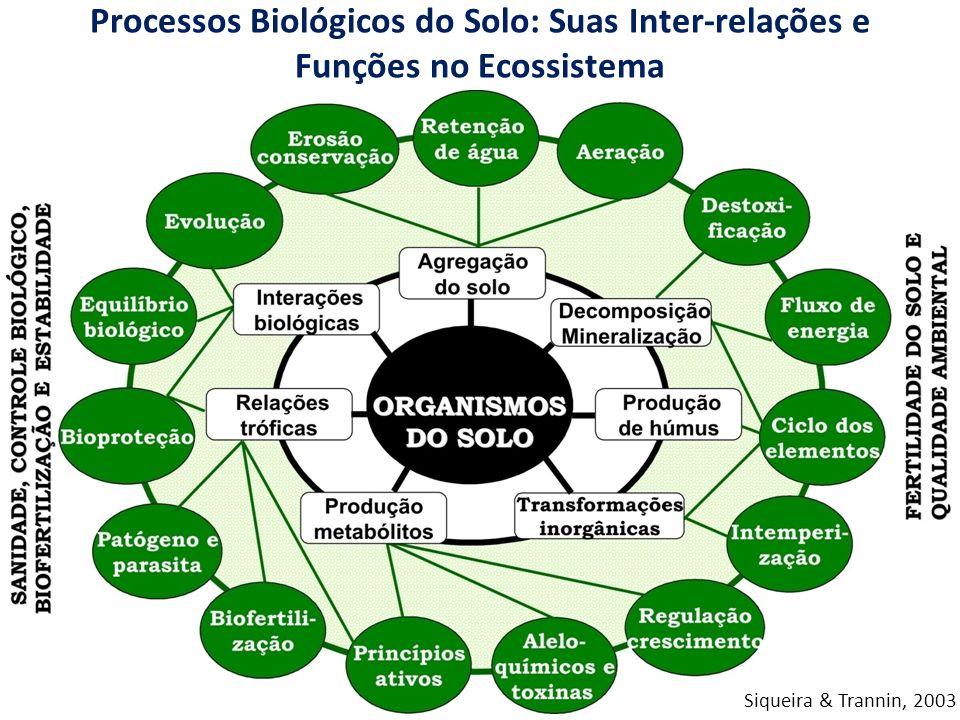 Processos Biológicos do Solo: Suas Inter-relações e Funções no Ecossistema Siqueira & Trannin, 2003
