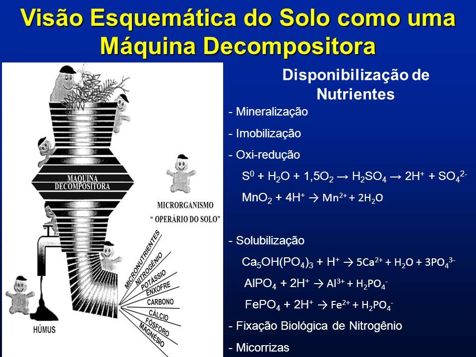 Visão Esquemática do Solo como uma Máquina Decompositora Disponibilização de Nutrientes - Mineralização - Imobilização - Oxi-redução S 0 + H 2 O + 1,5