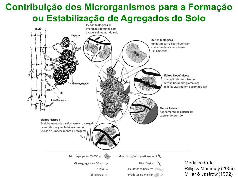 Contribuição dos Microrganismos para a Formação ou Estabilização de Agregados do Solo Modificado de Rillig & Mummey (2006) Miller & Jastrow (1992)