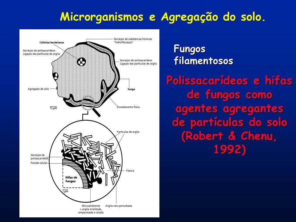 Microrganismos e Agregação do solo. Fungos filamentosos Polissacarídeos e hifas de fungos como agentes agregantes de partículas do solo (Robert & Chen