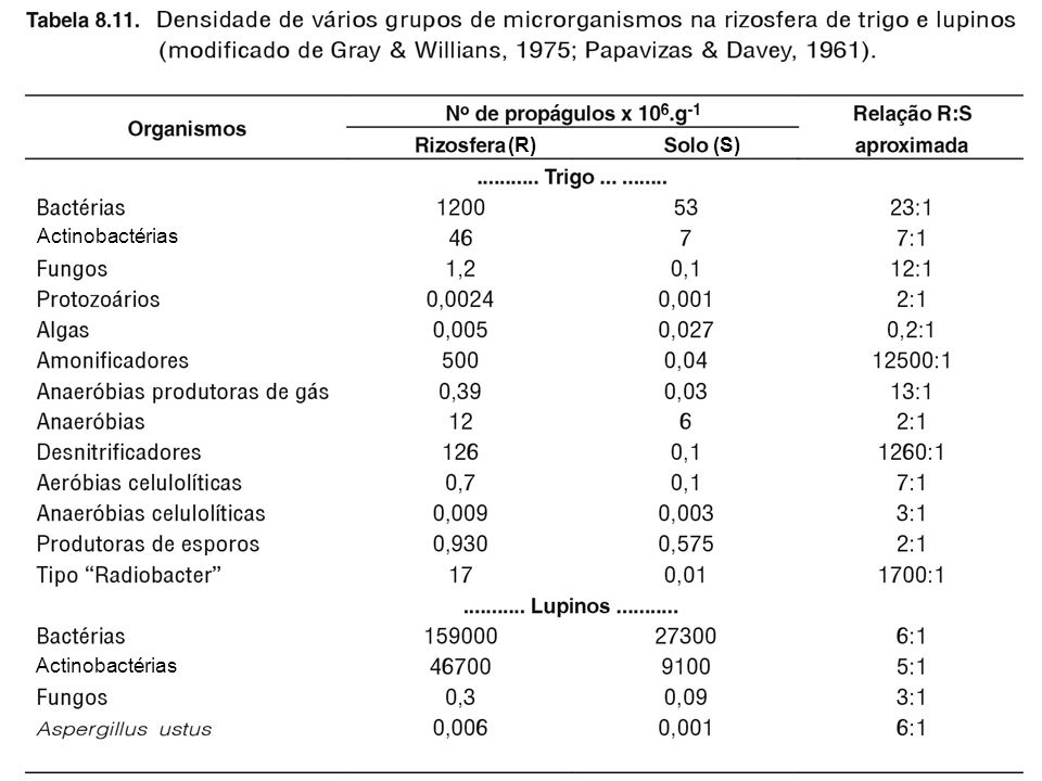 Actinobactérias (R) (S)