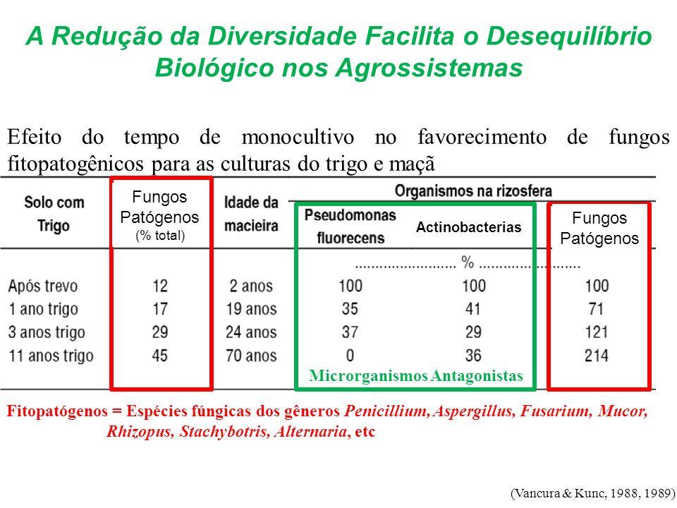 A Redução da Diversidade Facilita o Desequilíbrio Biológico nos Agrossistemas Microrganismos Antagonistas Fitopatógenos = Espécies fúngicas dos gênero