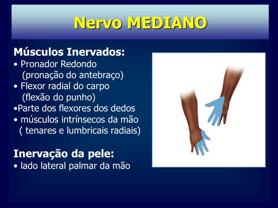 Nervo MEDIANO Músculos Inervados: Pronador Redondo (pronação do antebraço) Flexor radial do carpo (flexão do punho) Parte dos flexores dos dedos músculos intrínsecos da mão ( tenares e lumbricais radiais) Inervação da pele: lado lateral palmar da mão