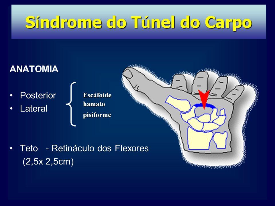 ANATOMIA Posterior Lateral Teto - Retináculo dos Flexores (2,5x 2,5cm) Escáfoidehamatopisiforme S í ndrome do T ú nel do Carpo
