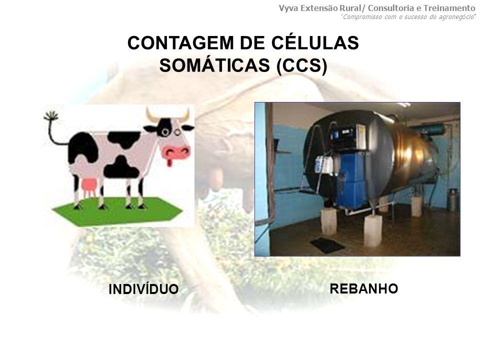 CONTAGEM DE CÉLULAS SOMÁTICAS (CCS) INDIVÍDUO REBANHO Vyva Extensão Rural/ Consultoria e Treinamento Compromisso com o sucesso do agroneg ó cio