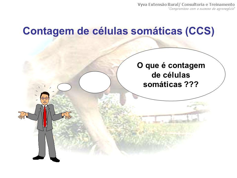 Contagem de células somáticas (CCS) O que é contagem de células somáticas ??? Vyva Extensão Rural/ Consultoria e Treinamento Compromisso com o sucesso