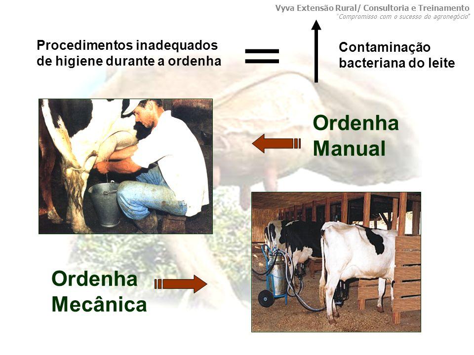 Procedimentos inadequados de higiene durante a ordenha = Contaminação bacteriana do leite Ordenha Manual Ordenha Mecânica Vyva Extensão Rural/ Consult