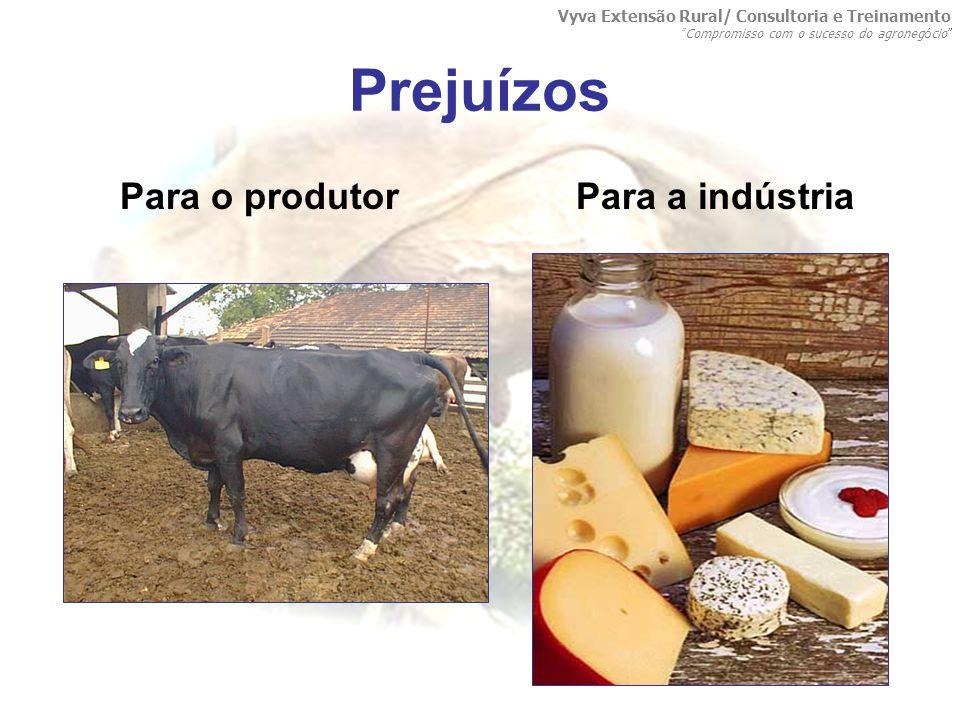 Prejuízos Para o produtor Para a indústria Vyva Extensão Rural/ Consultoria e Treinamento Compromisso com o sucesso do agroneg ó cio