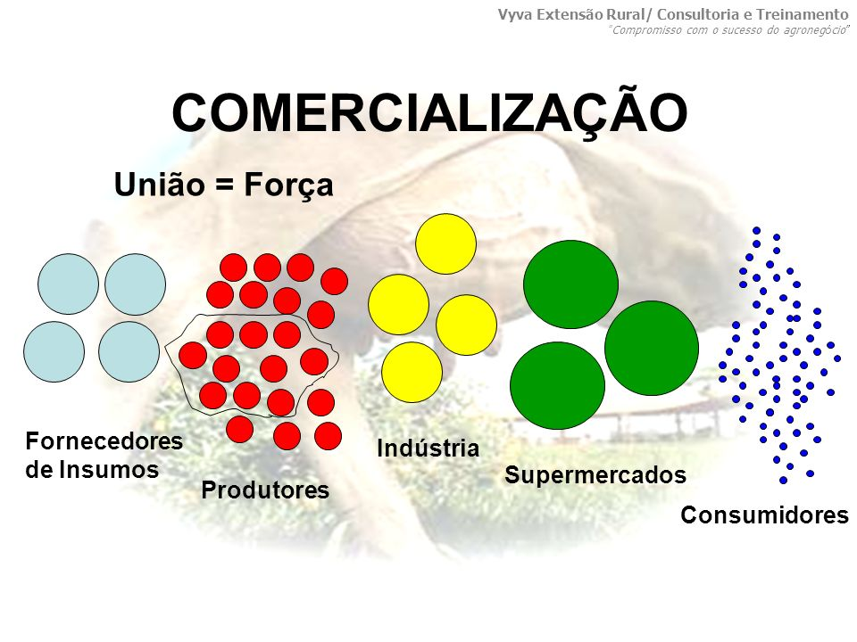 COMERCIALIZAÇÃO União = Força Produtores Indústria Supermercados Consumidores Fornecedores de Insumos Vyva Extensão Rural/ Consultoria e Treinamento C