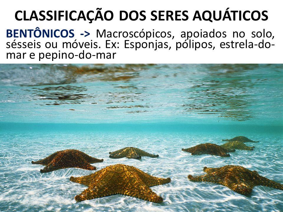 CLASSIFICAÇÃO DOS SERES AQUÁTICOS BENTÔNICOS -> Macroscópicos, apoiados no solo, sésseis ou móveis. Ex: Esponjas, pólipos, estrela-do- mar e pepino-do