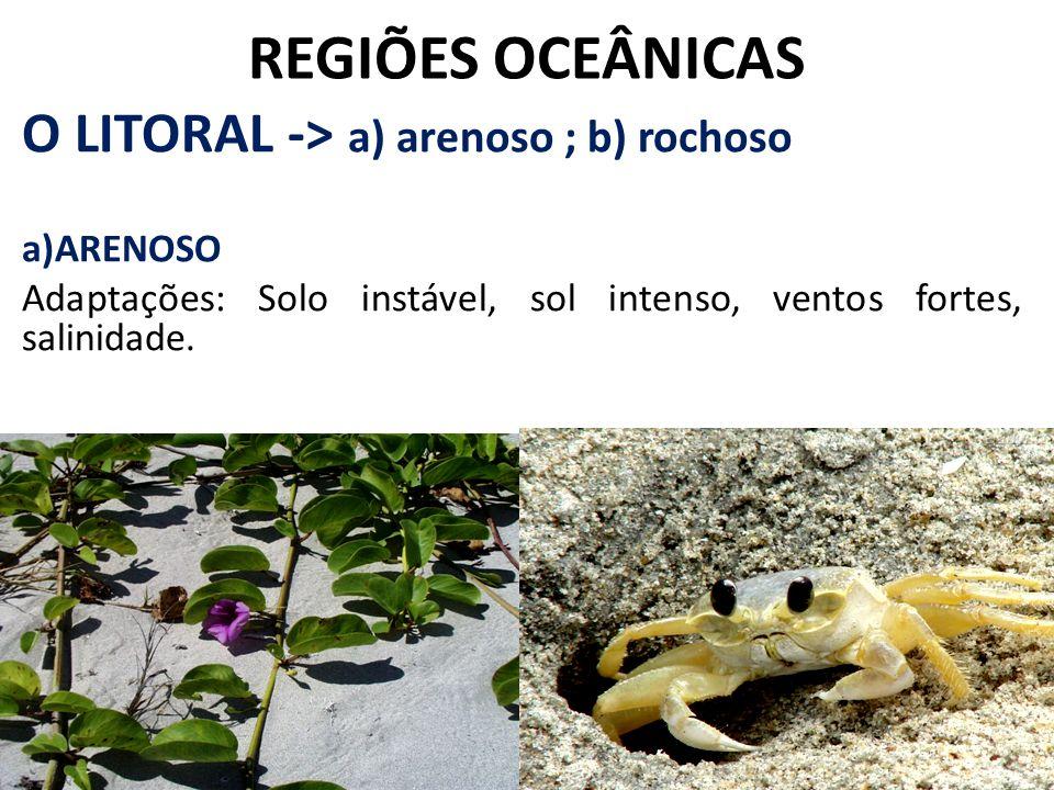 REGIÕES OCEÂNICAS O LITORAL -> a) arenoso ; b) rochoso a)ARENOSO Adaptações: Solo instável, sol intenso, ventos fortes, salinidade.