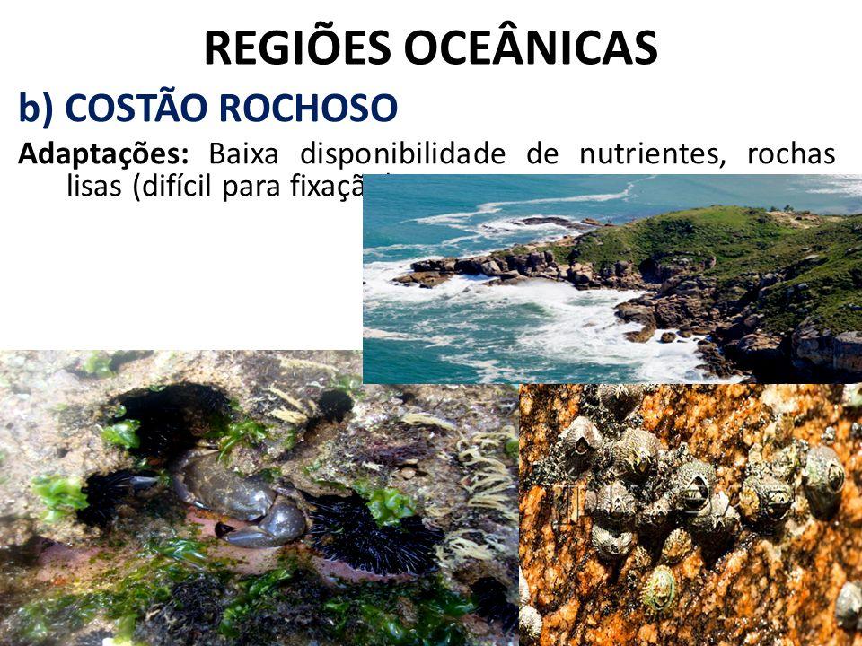 REGIÕES OCEÂNICAS b) COSTÃO ROCHOSO Adaptações: Baixa disponibilidade de nutrientes, rochas lisas (difícil para fixação).