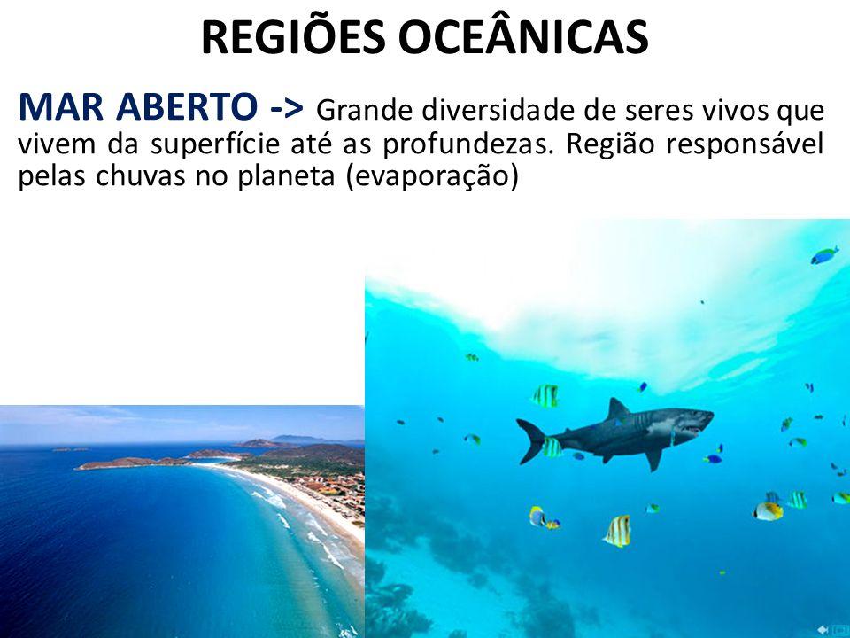 REGIÕES OCEÂNICAS MAR ABERTO -> Grande diversidade de seres vivos que vivem da superfície até as profundezas. Região responsável pelas chuvas no plane