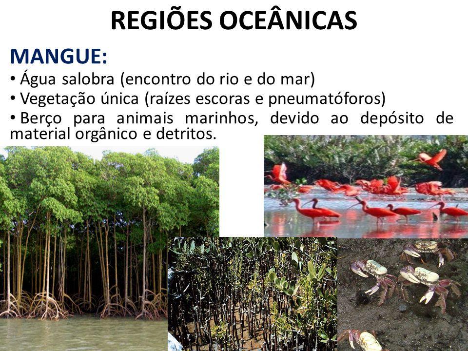 REGIÕES OCEÂNICAS MANGUE: Água salobra (encontro do rio e do mar) Vegetação única (raízes escoras e pneumatóforos) Berço para animais marinhos, devido