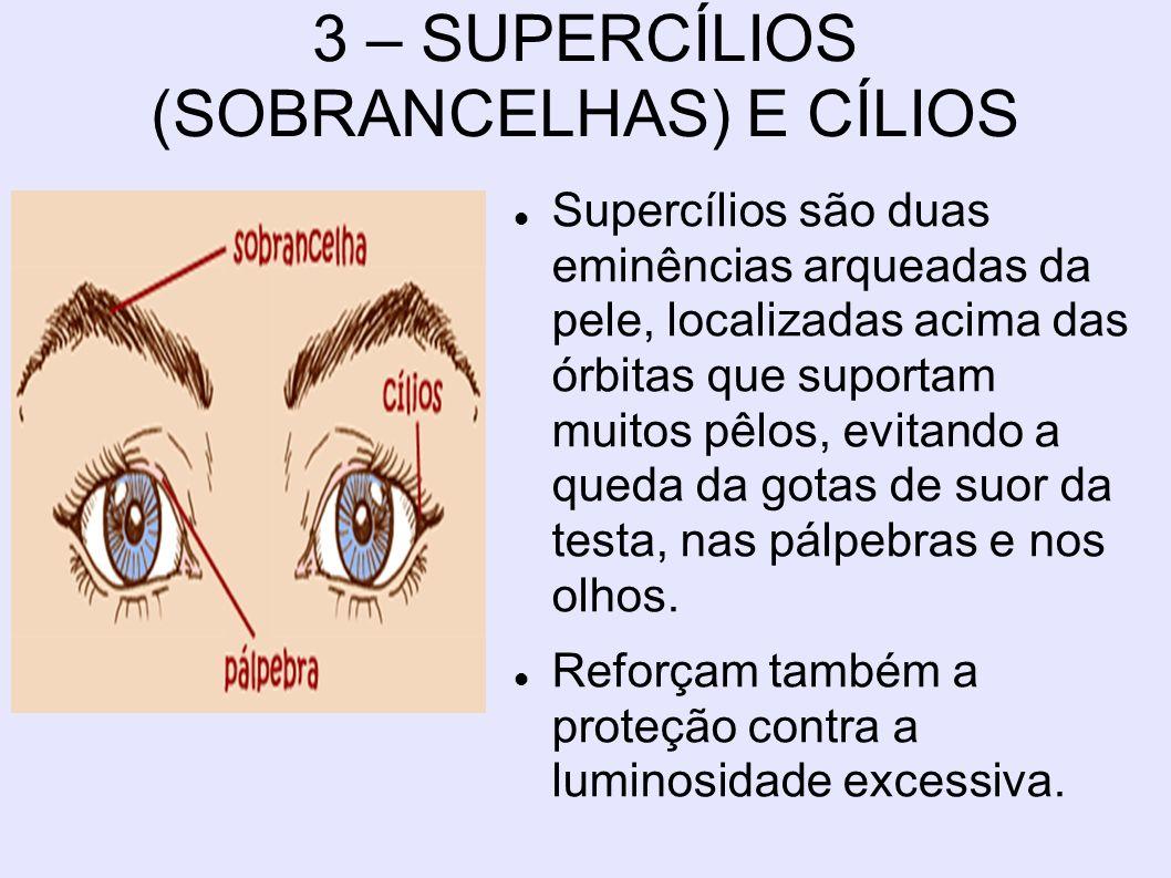 3 – SUPERCÍLIOS (SOBRANCELHAS) E CÍLIOS Supercílios são duas eminências arqueadas da pele, localizadas acima das órbitas que suportam muitos pêlos, ev