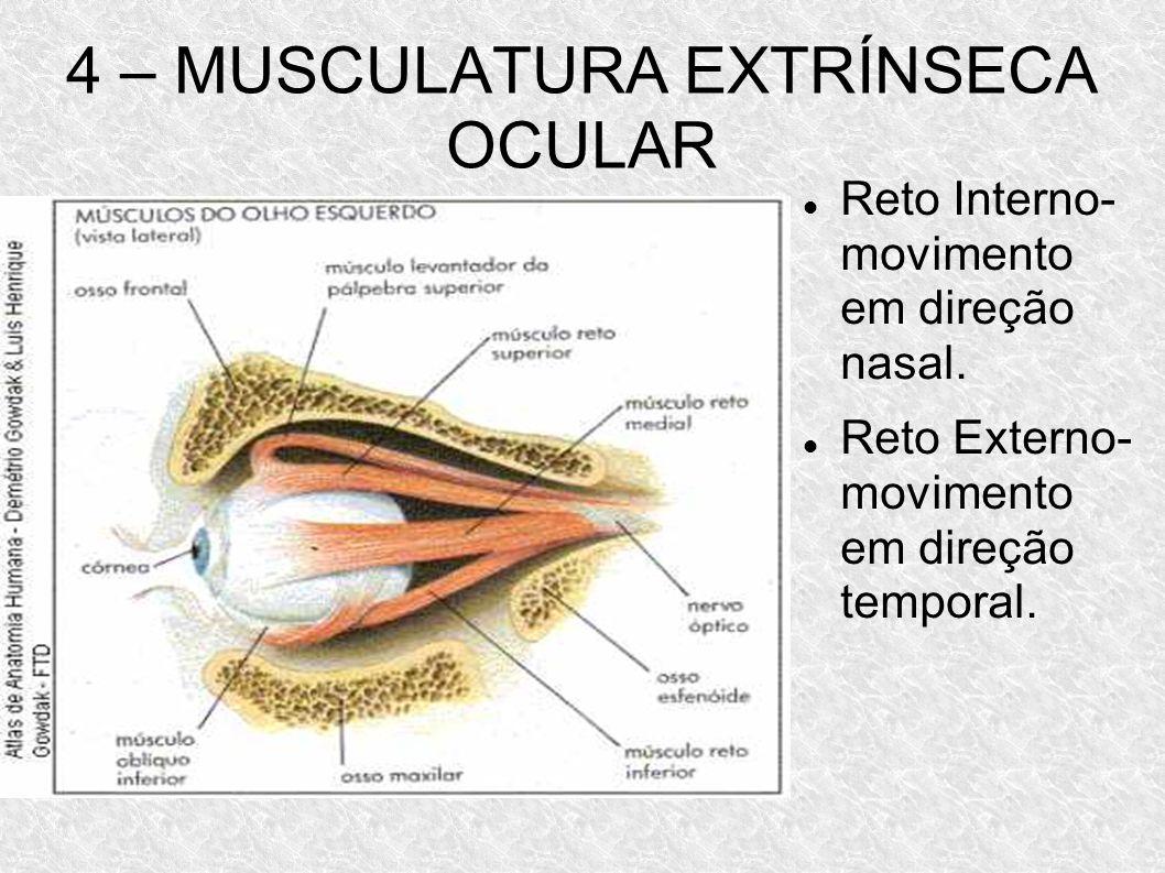 4 – MUSCULATURA EXTRÍNSECA OCULAR Reto Interno- movimento em direção nasal. Reto Externo- movimento em direção temporal.