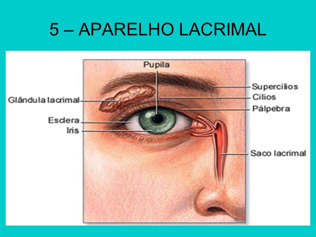 5 – APARELHO LACRIMAL