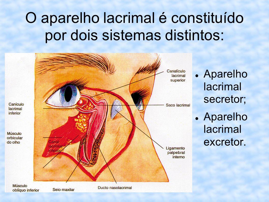O aparelho lacrimal é constituído por dois sistemas distintos: Aparelho lacrimal secretor; Aparelho lacrimal excretor.