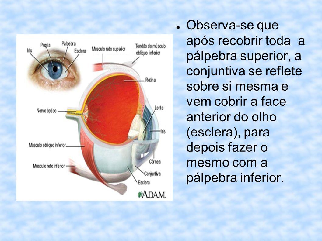 Observa-se que após recobrir toda a pálpebra superior, a conjuntiva se reflete sobre si mesma e vem cobrir a face anterior do olho (esclera), para dep