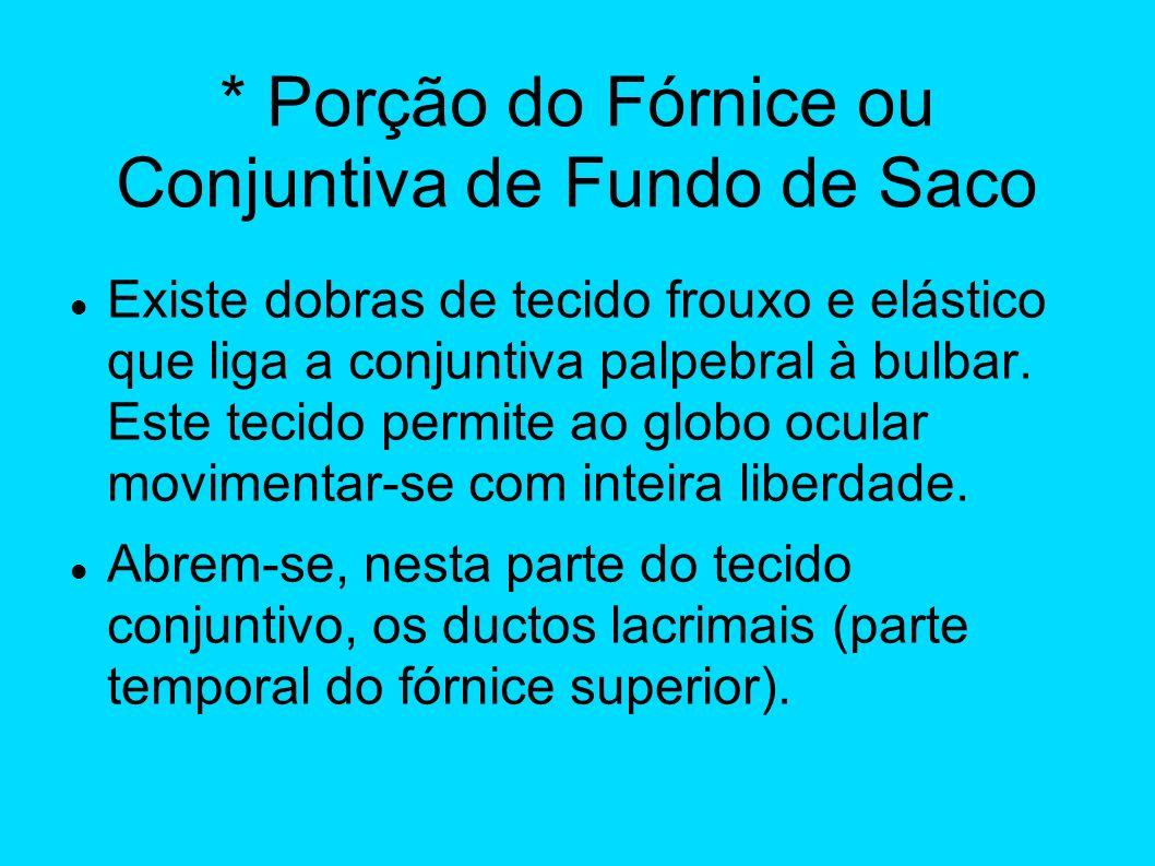 * Porção do Fórnice ou Conjuntiva de Fundo de Saco Existe dobras de tecido frouxo e elástico que liga a conjuntiva palpebral à bulbar. Este tecido per