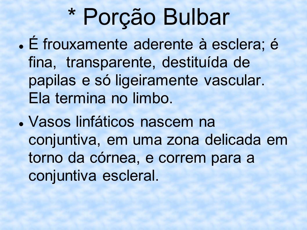 * Porção Bulbar É frouxamente aderente à esclera; é fina, transparente, destituída de papilas e só ligeiramente vascular. Ela termina no limbo. Vasos
