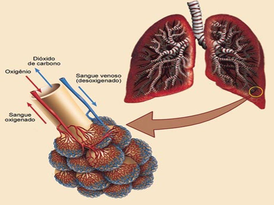 Gases Respiratórios Nitrogênio: 78% Oxigênio: 21% Gás Carbônico:0.03% Pressão atmosférica dos gases Ao nível do maré 760mmHg (milímetro de mercúrio) Nitrogênio é responsável 78% da pressão de 760mmHg, Oxigênio é 21% e Gás Carbônico é desprezível, pois é abaixo de zero 4