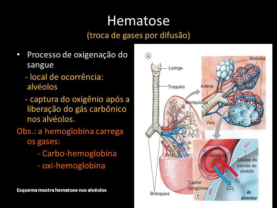 Hematose (troca de gases por difusão) Processo de oxigenação do sangue - local de ocorrência: alvéolos - captura do oxigênio após a liberação do gás c