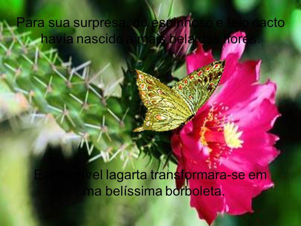 36 Para sua surpresa, do espinhoso e feio cacto havia nascido a mais bela das flores. E a horrível lagarta transformara-se em uma belíssima borboleta.