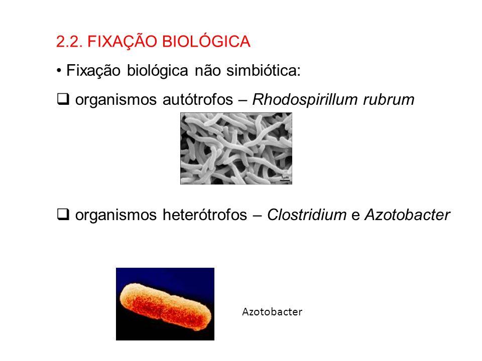2.2. FIXAÇÃO BIOLÓGICA Fixação biológica não simbiótica: organismos autótrofos – Rhodospirillum rubrum organismos heterótrofos – Clostridium e Azotoba